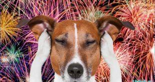 Мы празднуем, а у собаки стресс
