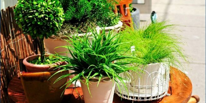 Какие конкретно комнатные растения нужны для здоровья