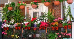 Какими цветами украсить балконный цветник
